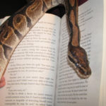 Una serpiente entre los libros