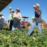 Agricultores temen quedarse sin mano de obra
