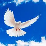 No hay paz sin Dios